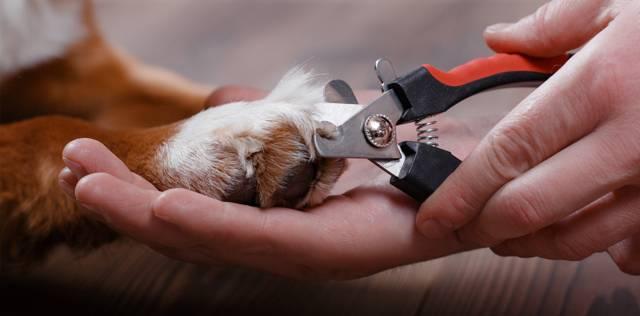 Как подстричь когти собаке: подробная инструкция с фото