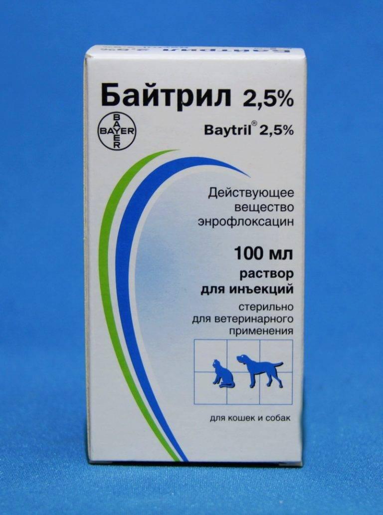Байтрил для кошек: инструкция по применению препарата и отзывы