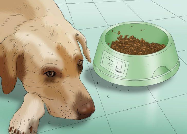 Собаку вырвало кормом