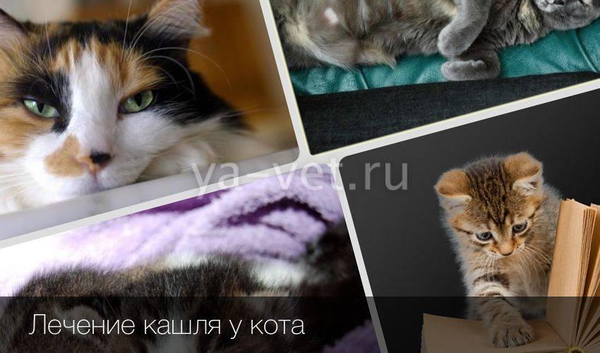 Кошка кашляет и хрипит вытягиваясь и прижимаясь к полу: что делать, тяжело дышит, причины и лечение
