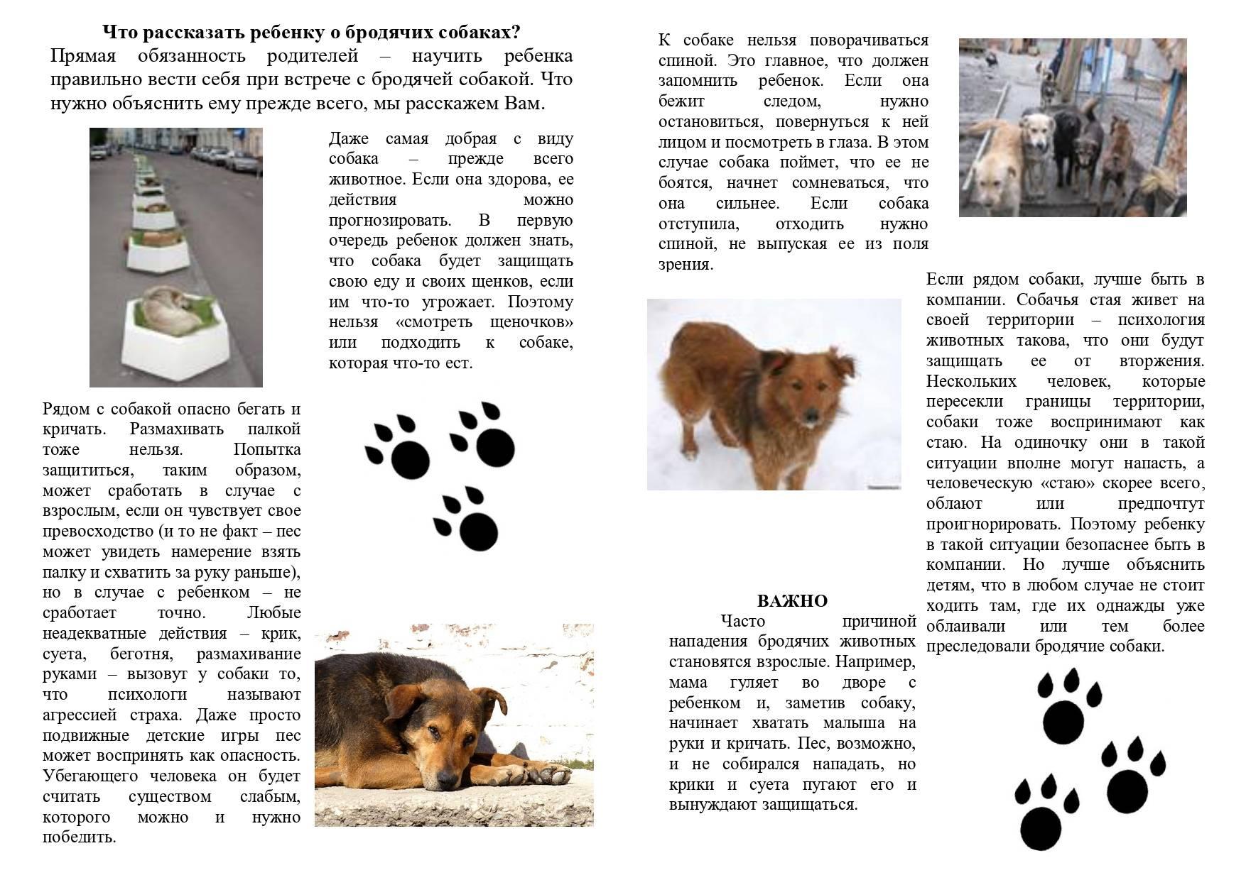 Как действовать при нападении собак: самые опасные породы собак, причины нападения, самооборона, как использовать подручные средства.