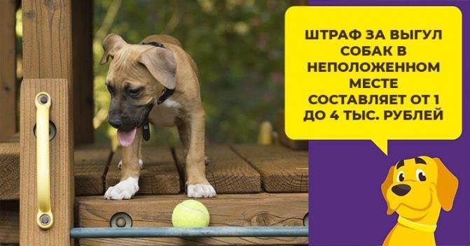 Какие правила по выгулу собак существуют? что трактует закон?