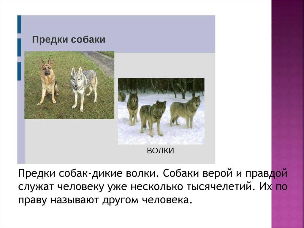 Происхождение кошек: история вида, от кого, откуда и когда появились, одомашнивание