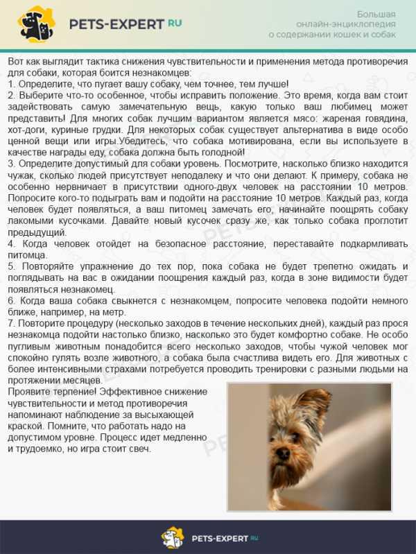 Собака боится людей, что делать? узнайте из нашей статьи!