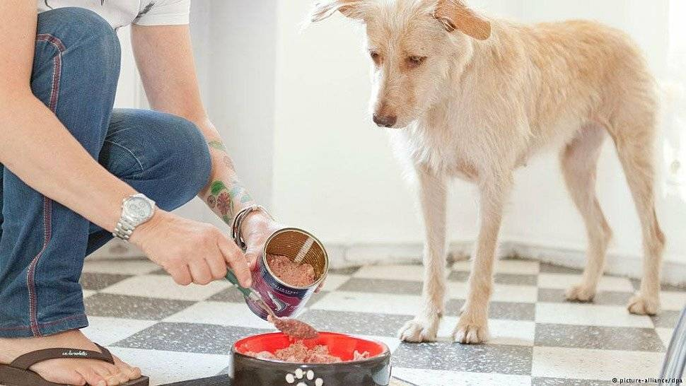Можно ли кормить собаку кошачьим сухим кормом