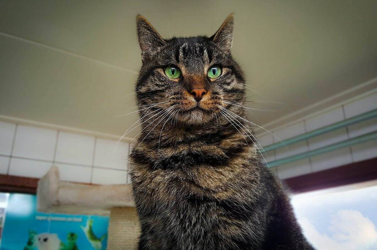 Кошек какой порода можно заводить в частном доме