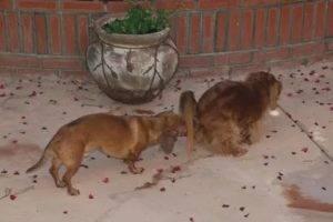 Шпиц ест свои экскременты что делать. почему собака ест кал, чего ей не хватает. проблемы со здоровьем - новая медицина