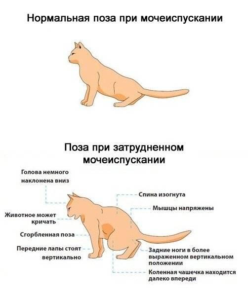 Что делать, если собака стала писать под себя?