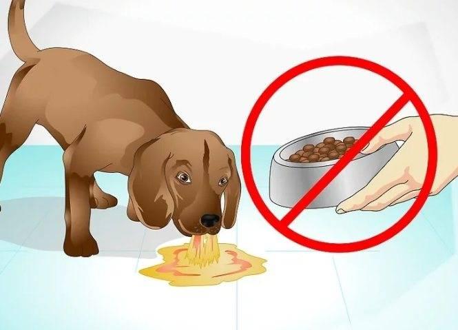 Рвота у собаки: чем помочь, причины и виды, с кровью, с желчью, сопровождается температурой