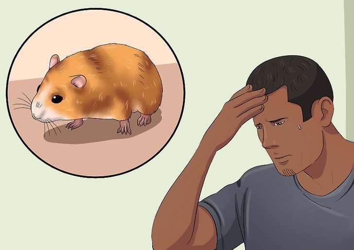 Что делать если потерялся хомяк. как найти и поймать сбежавшего хомяка в квартире. клетка – дом родной