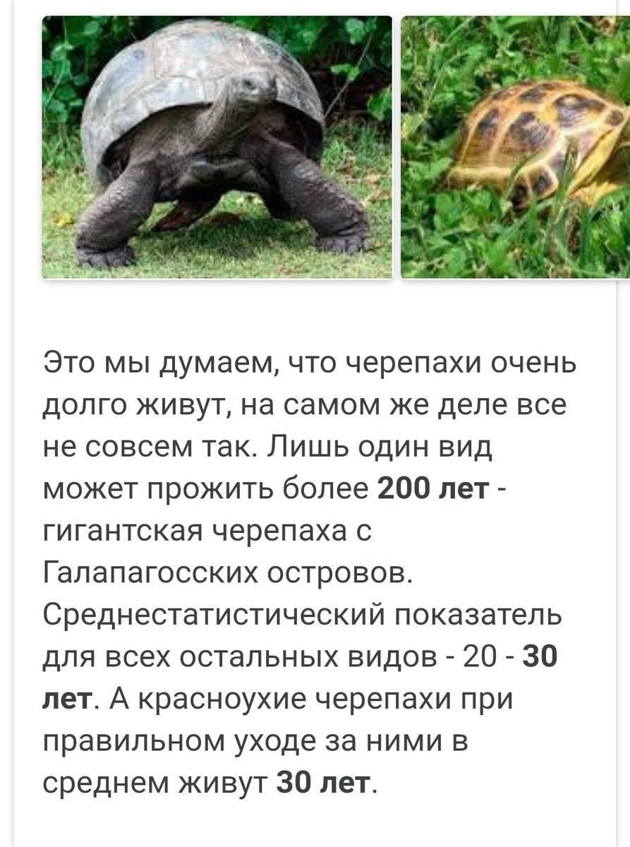 Сколько живут черепахи в домашних условиях сколько живут черепахи в домашних условиях