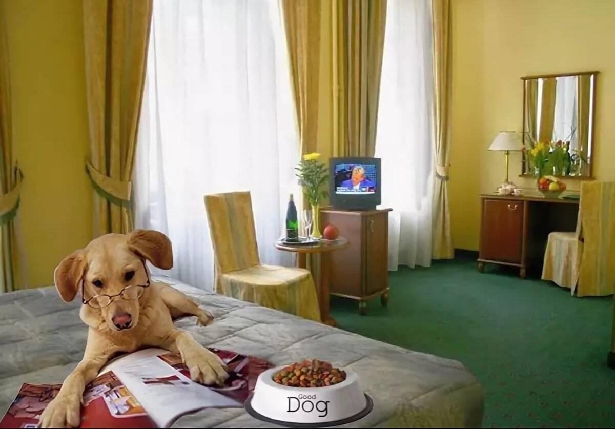Отдых в подмосковье с собакой: обзор отелей и баз отдыха