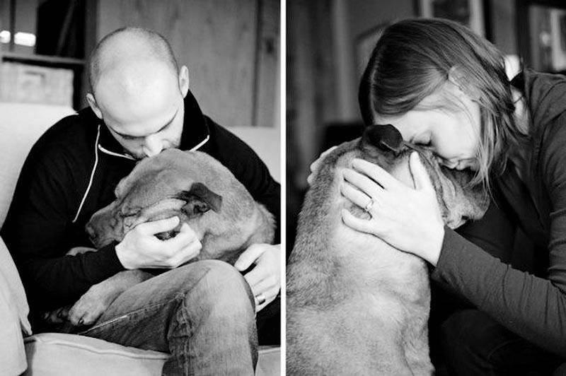 Почему у собак существует привычка облизывать своих хозяев