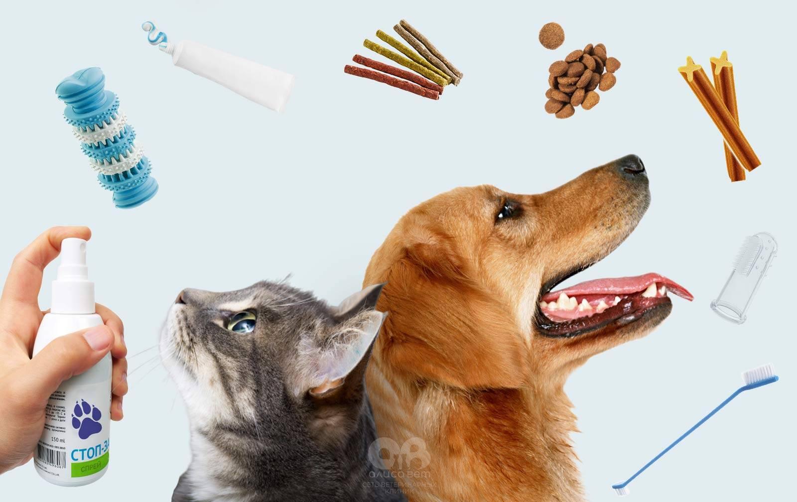 Есть ли лакомства для чистки зубов для кошек? | мир кошек какие лакомства выбрать для чистки зубов у кошки? | мир кошек