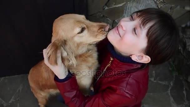 Собака лижет хозяина: причины