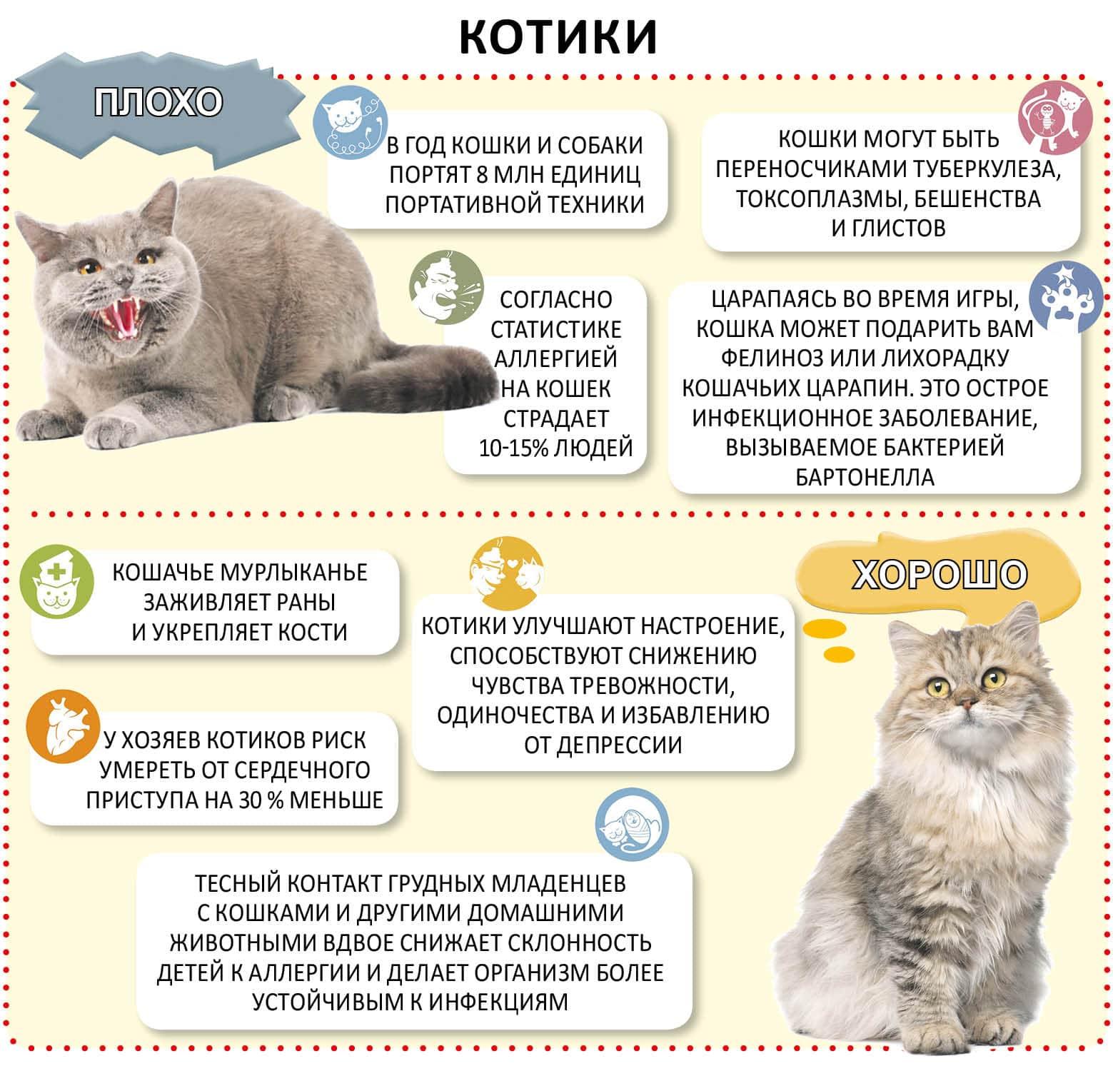 Дневные и недельные графики развития котят после рождения с описанием изменений