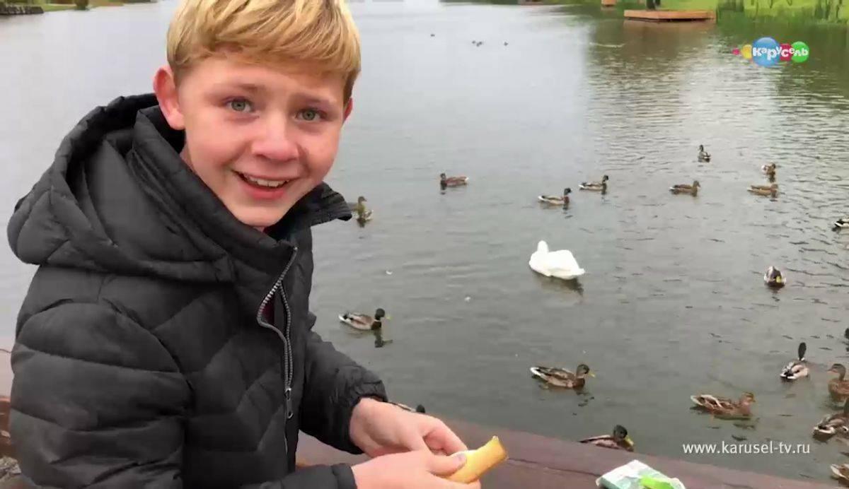 Чем кормить уток на пруду летом
