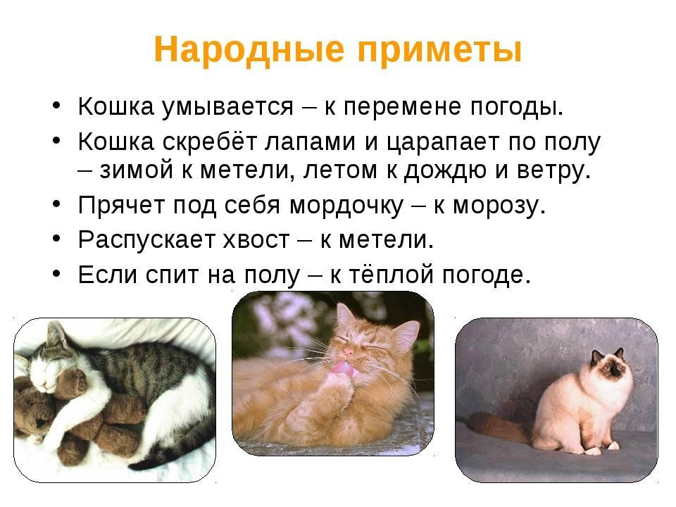 Куда уходят умирать кошки, почему они покидают дом перед смертью и где искать ушедшего кота?