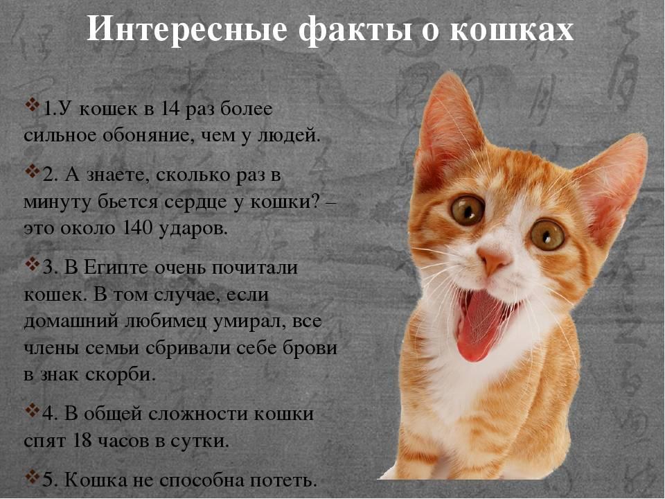 Факты о кошках: интересные и забавные мелочи из жизни котов