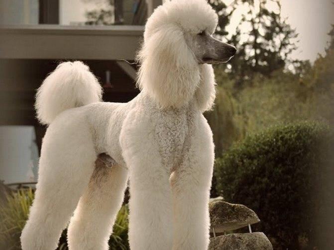 Породы собак маленьких размеров с фото, названиями и особенностями характера