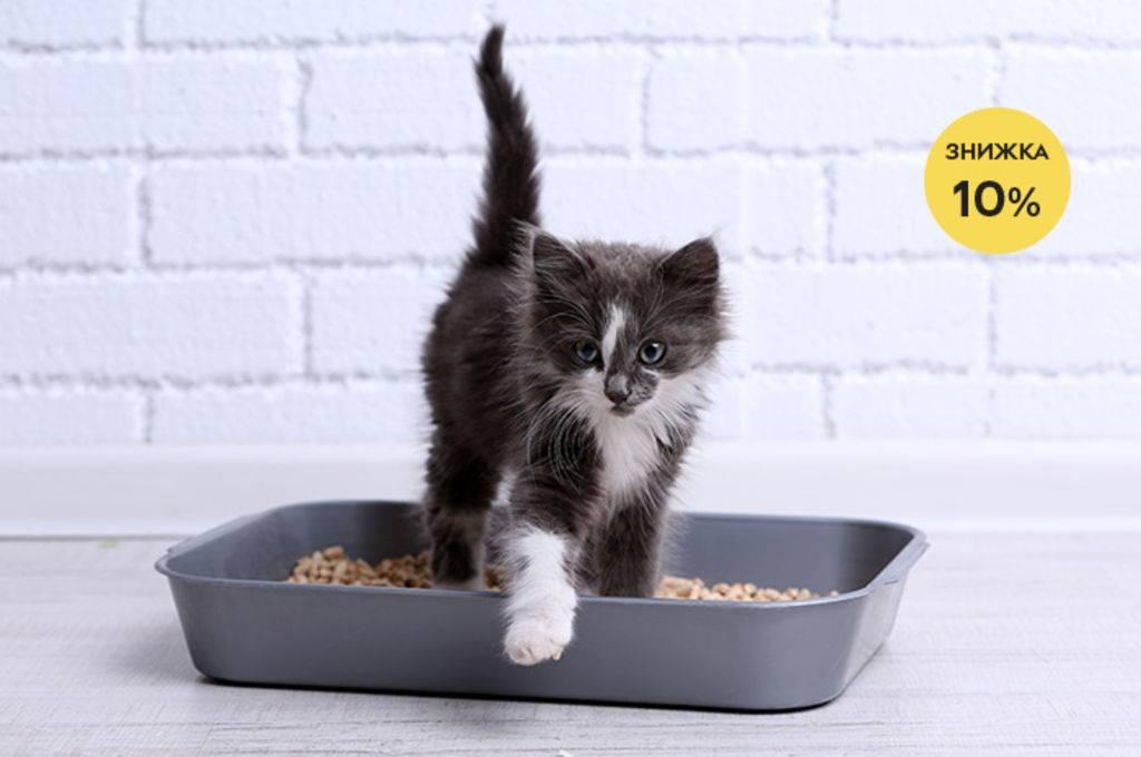 Почему кошка закапывает миску с едой и что это значит?