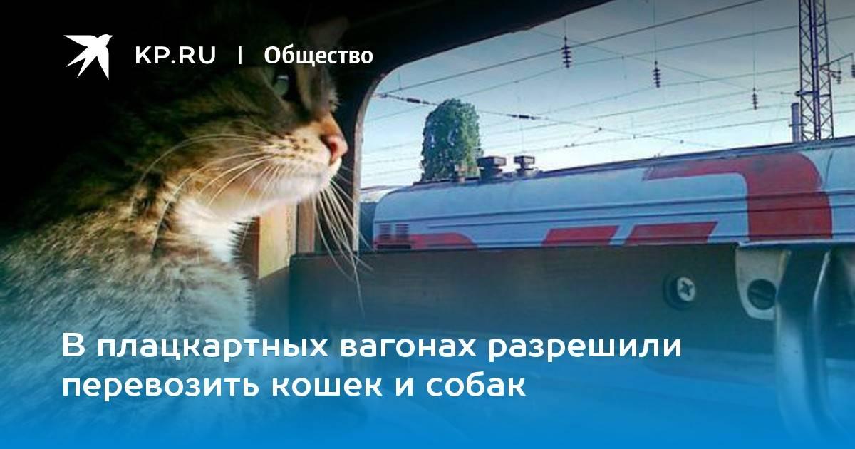 Правила перевозки кошек в поезде: как оформить, что взять с собой