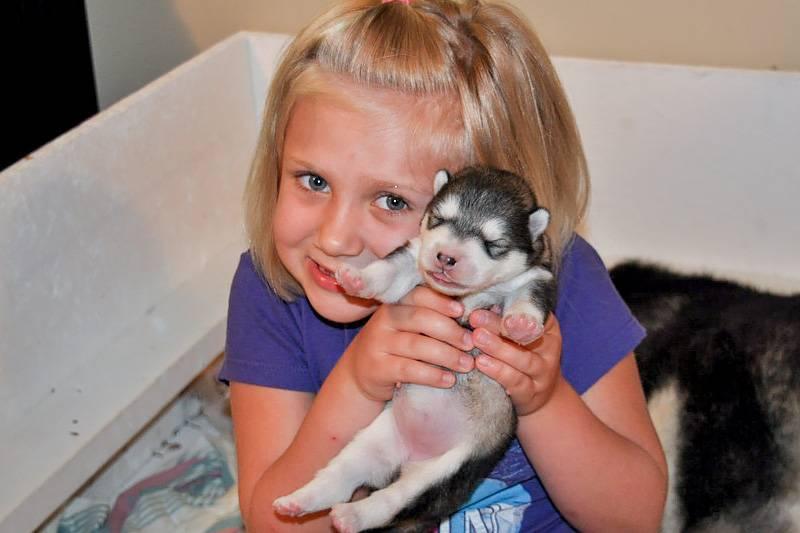 Как уговорить родителей купить собаку: секреты успеха - kot-pes