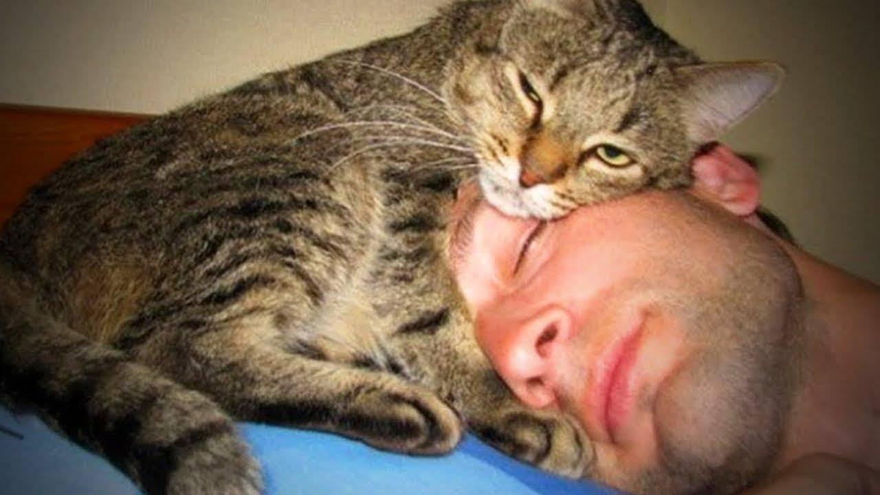 Почему кошка ложится на человека: причины и народные приметы