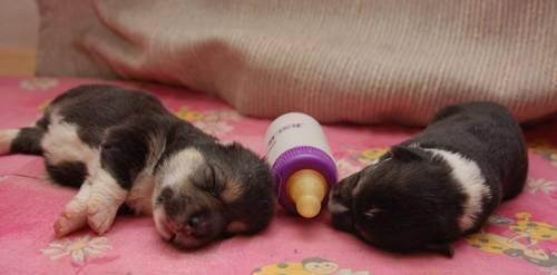 Чем кормить собаку после родов, чтобы было молоко