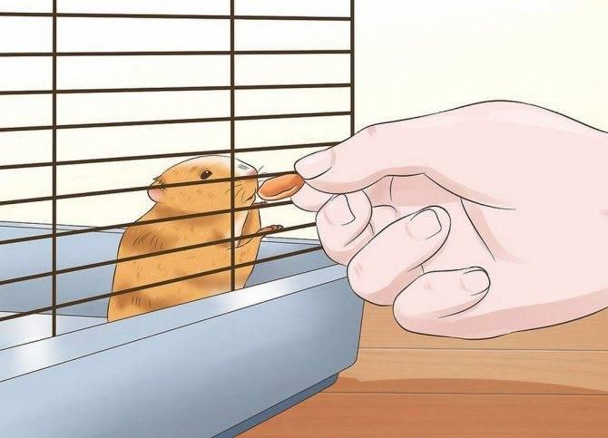 Как играть с декоративной крысой в домашних условиях