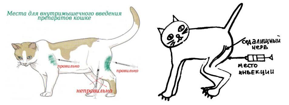 Холка у кошек и котов: где находится | фото