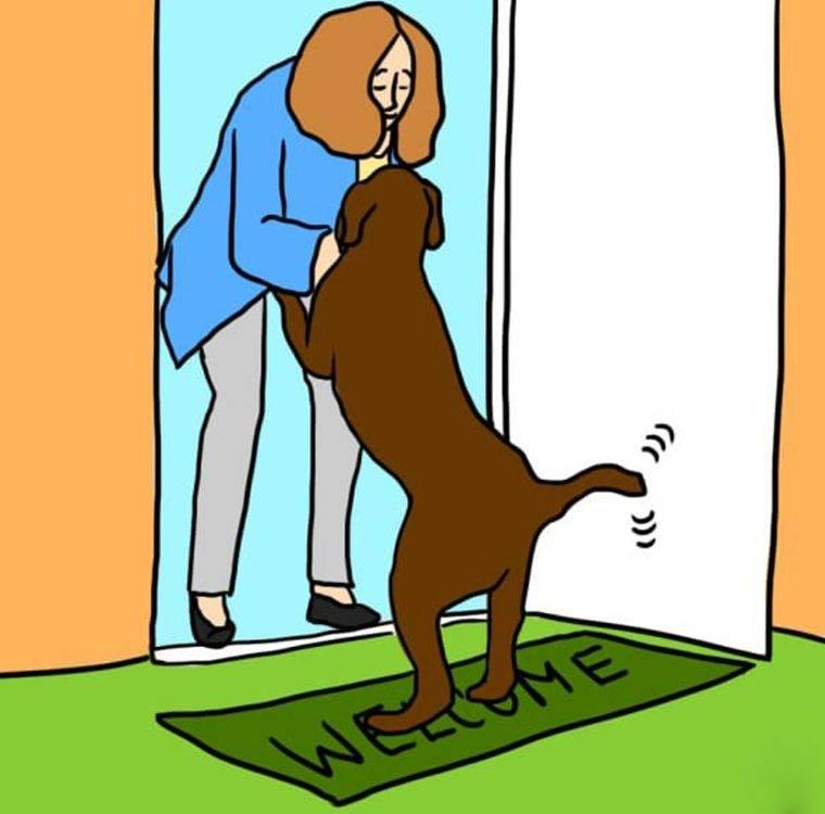 Собака лижет под хвостом анус: почему так происходит