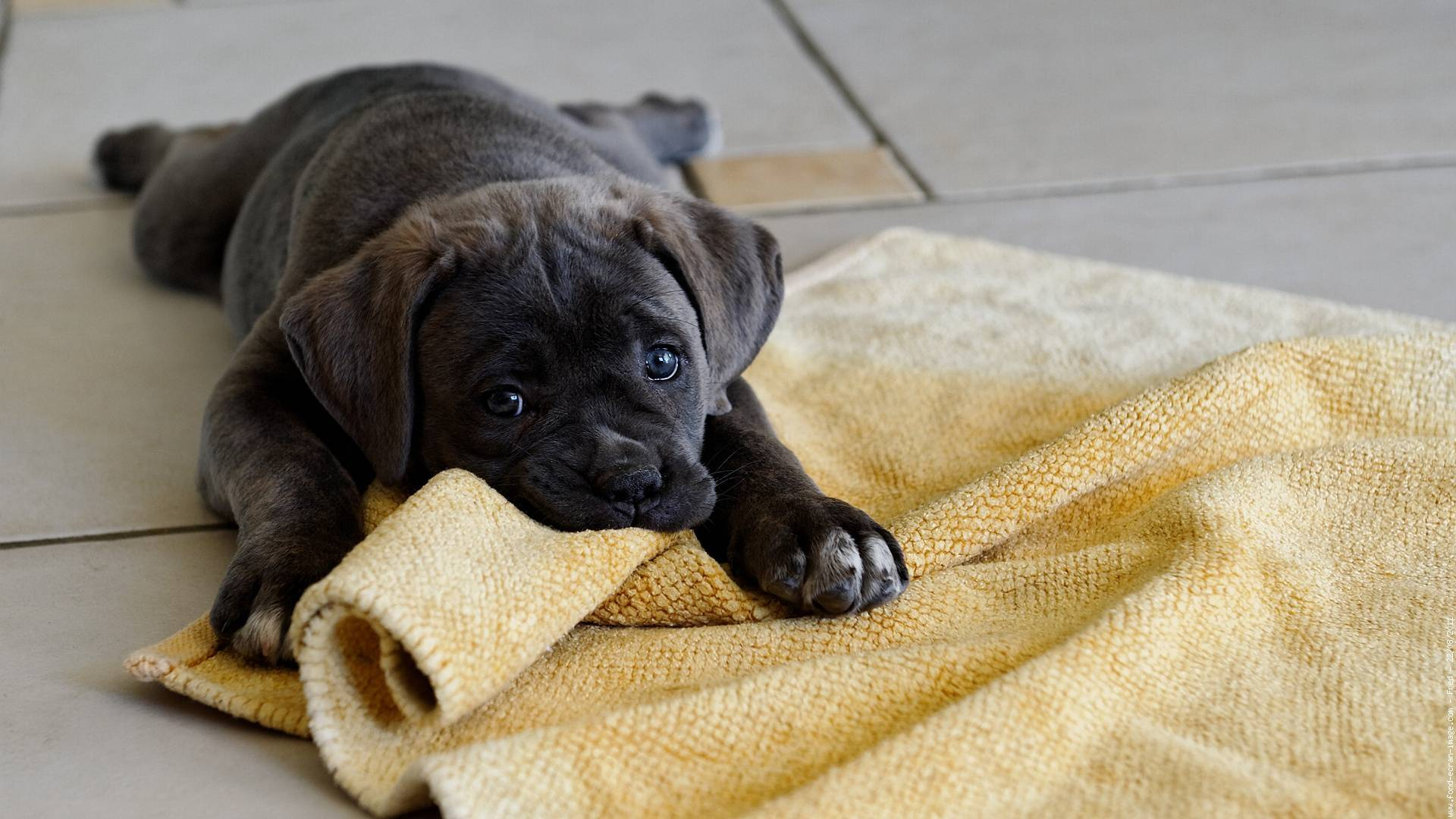 ᐉ когда можно отдавать щенка новым хозяевам? - zoomanji.ru