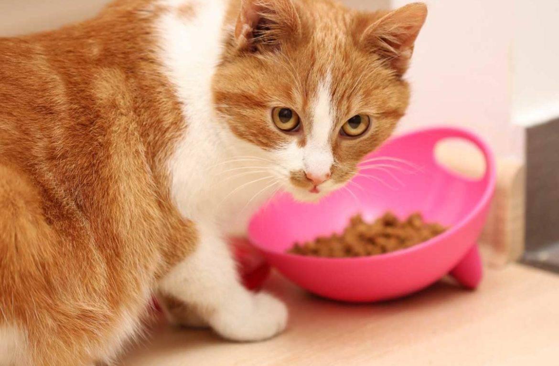 Как помочь коту в жару дома: охлаждаем питомца