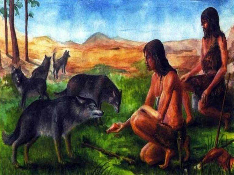 Как появились собаки и их породы?