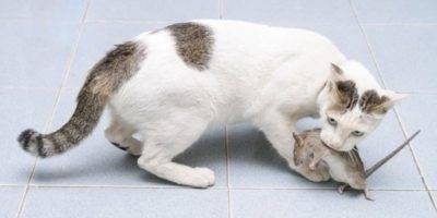 Почему кошка трясет хвостом как будто метит?