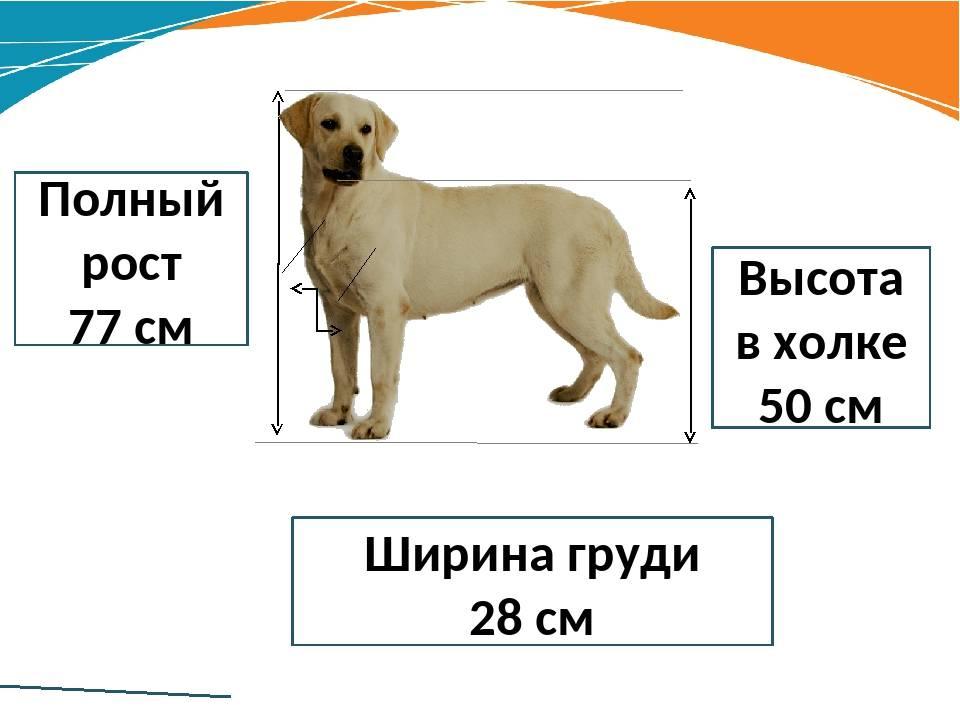 Где холка у собаки, и как сделать укол подкожно и внутримышечно