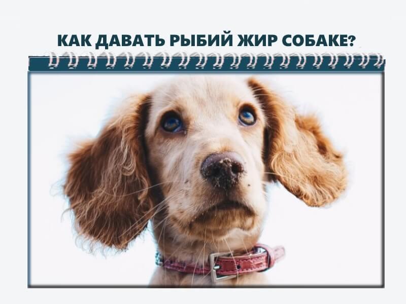 Можно ли собаки человеческий рыбий жир