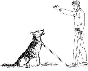 """Как научить собаку команде «голос»? спросим у опытных собаководов — журнал """"рутвет"""""""