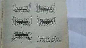 Как определить возраст щенка по зубам и другим признакам?