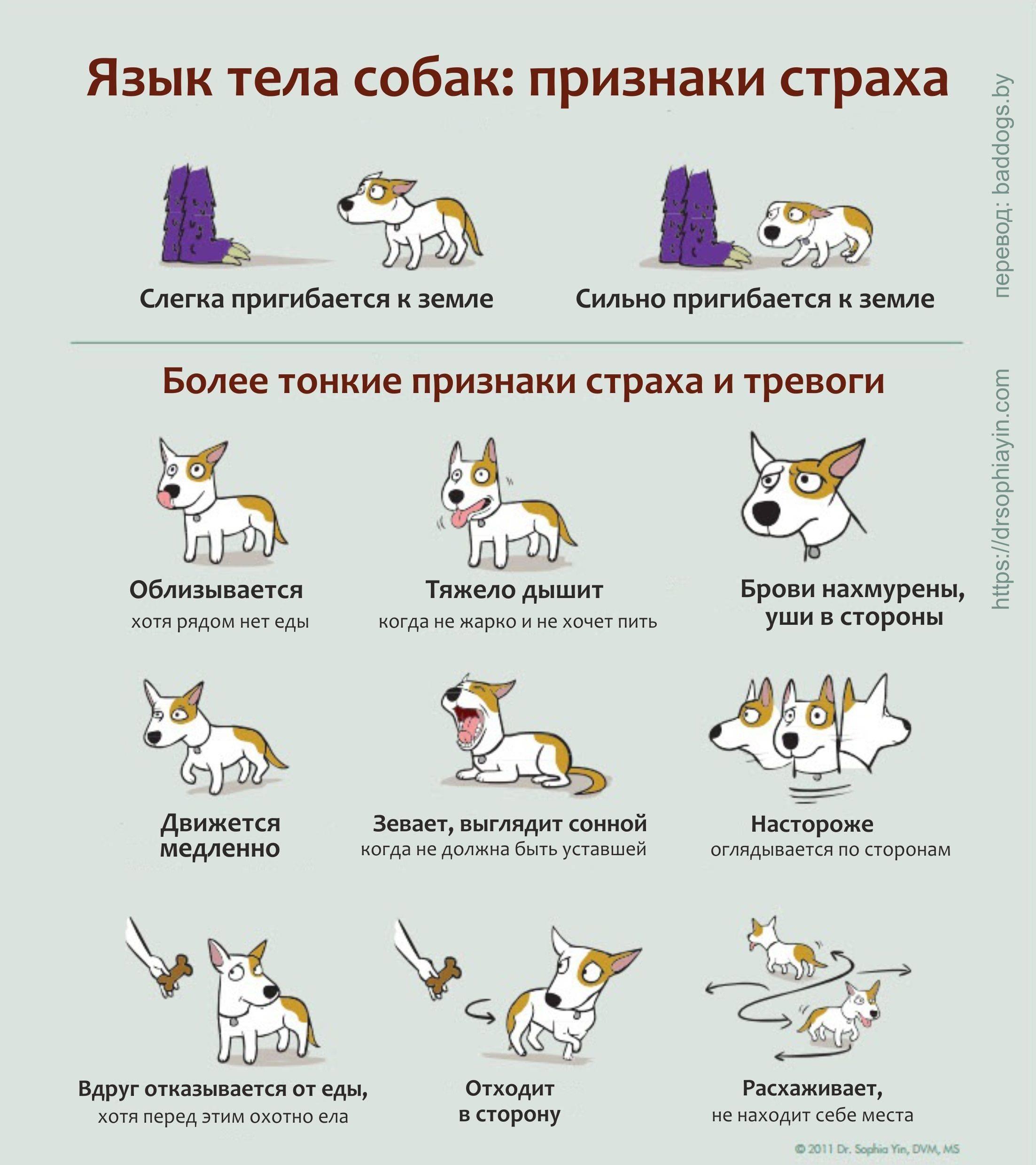 """4 способа научить собаку команде """"голос"""""""