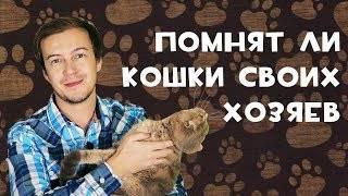 Ученые объяснили, почему кошки не скучают по хозяевам