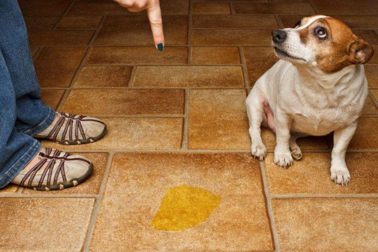 Собака воет: что делать и как отучить собаку выть когда она остается одна - что сделать, чтобы собака не выла в отсутствие хозяев - лапы и хвост