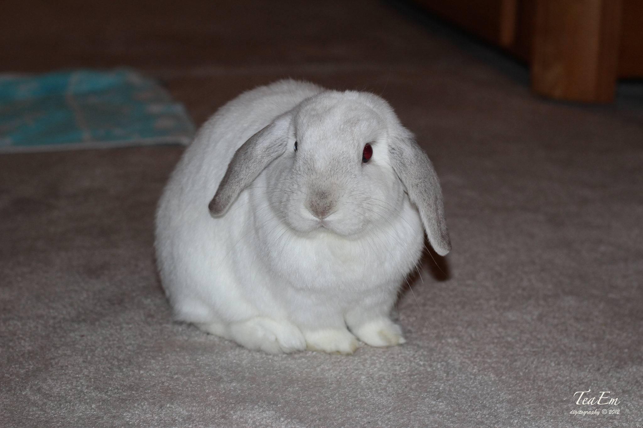 Как назвать кролика: имена для девочек и мальчиков