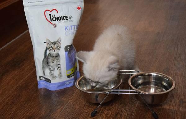 Сколько раз в день нужно кормить котёнка и чем?