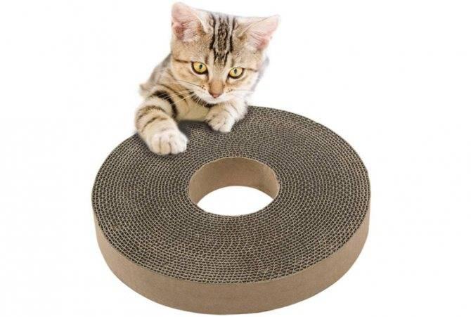 Как приучить котенка, взрослого кота или кошку к когтеточке, чем ее побрызгать: 7 простых правил