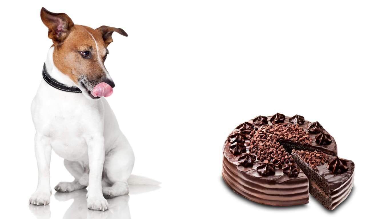 Можно ли собакам сладкое? почему собакам нельзя сладкое?