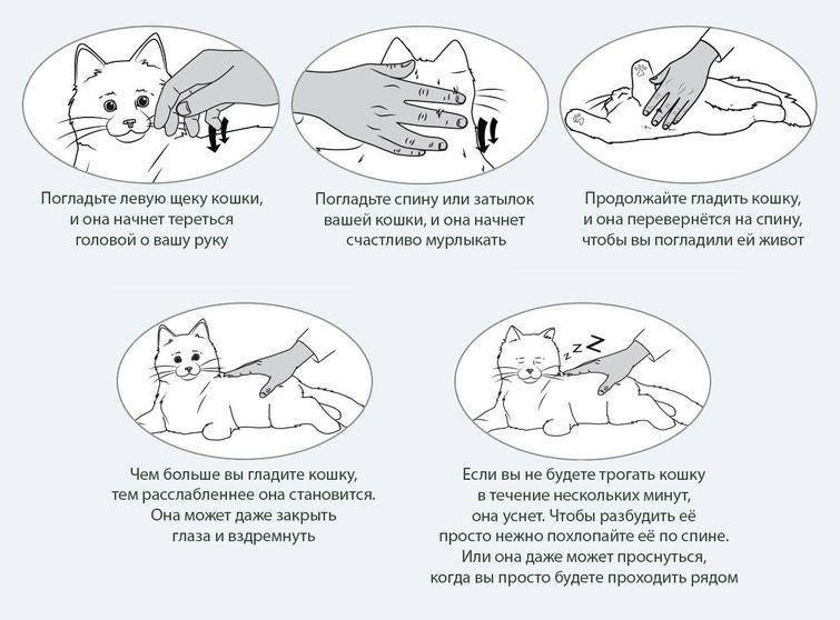 Почему кошки топчут нас лапками и мурчат, когда выпускают когти