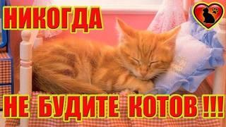 Почему кошке нельзя спать с хозяином: все за и против совместного сна с питомцем