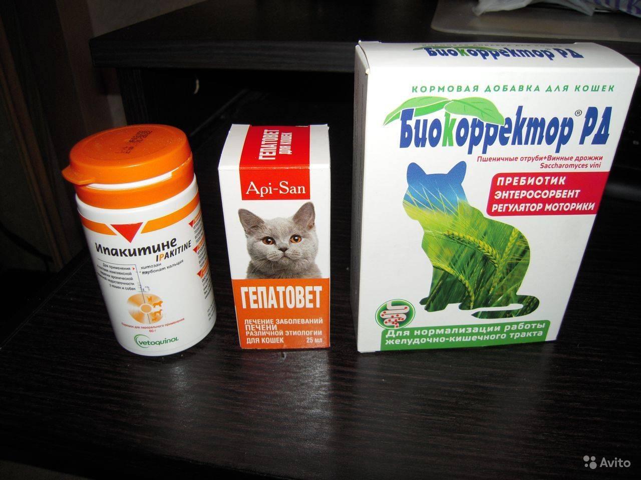Инструкция по применению препарата ипакитине для кошек и собак